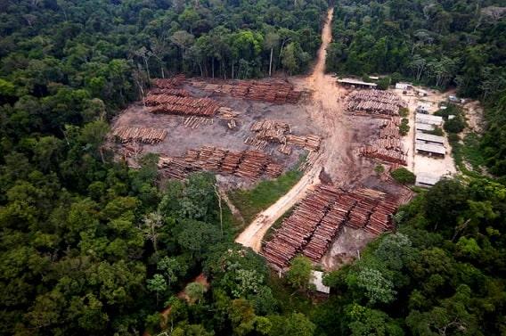 Governo Bolsonaro decreta a morte de um pedaço da Amazônia